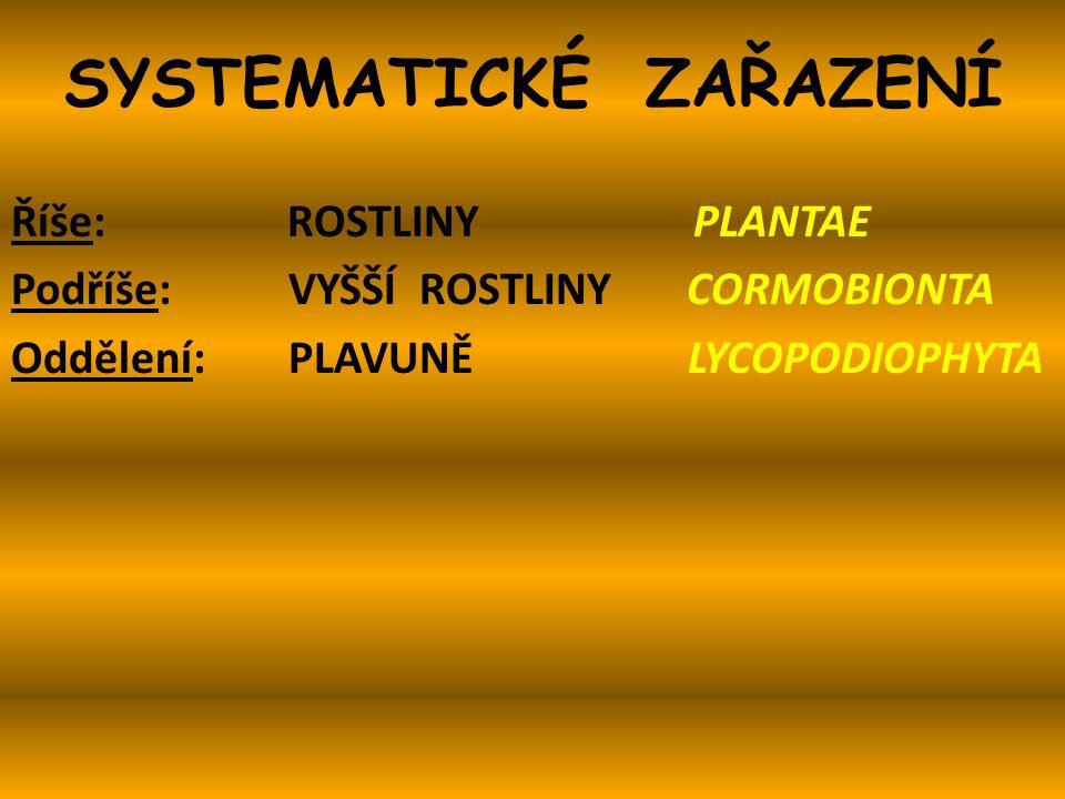 SYSTEMATICKÉ ZAŘAZENÍ Říše: ROSTLINY PLANTAE Podříše: VYŠŠÍ ROSTLINY CORMOBIONTA Oddělení: PLAVUNĚ LYCOPODIOPHYTA