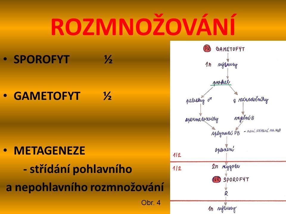 ROZMNOŽOVÁNÍ SPOROFYT ½ GAMETOFYT ½ METAGENEZE - střídání pohlavního a nepohlavního rozmnožování Obr.