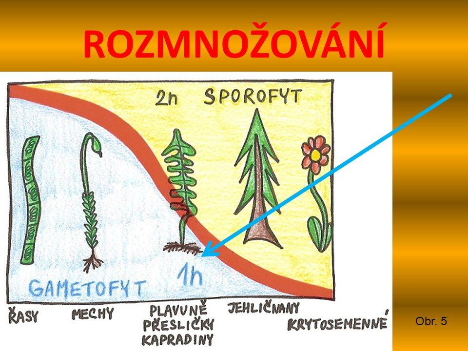 PLAVUŇ VIDLAČKA Jehličnaté lesy Čárkovité listy Plazivý stonek Chráněná Obr. 6