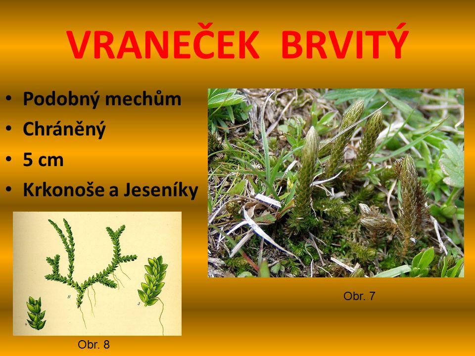 VRANEČEK BRVITÝ Podobný mechům Chráněný 5 cm Krkonoše a Jeseníky Obr. 7 Obr. 8