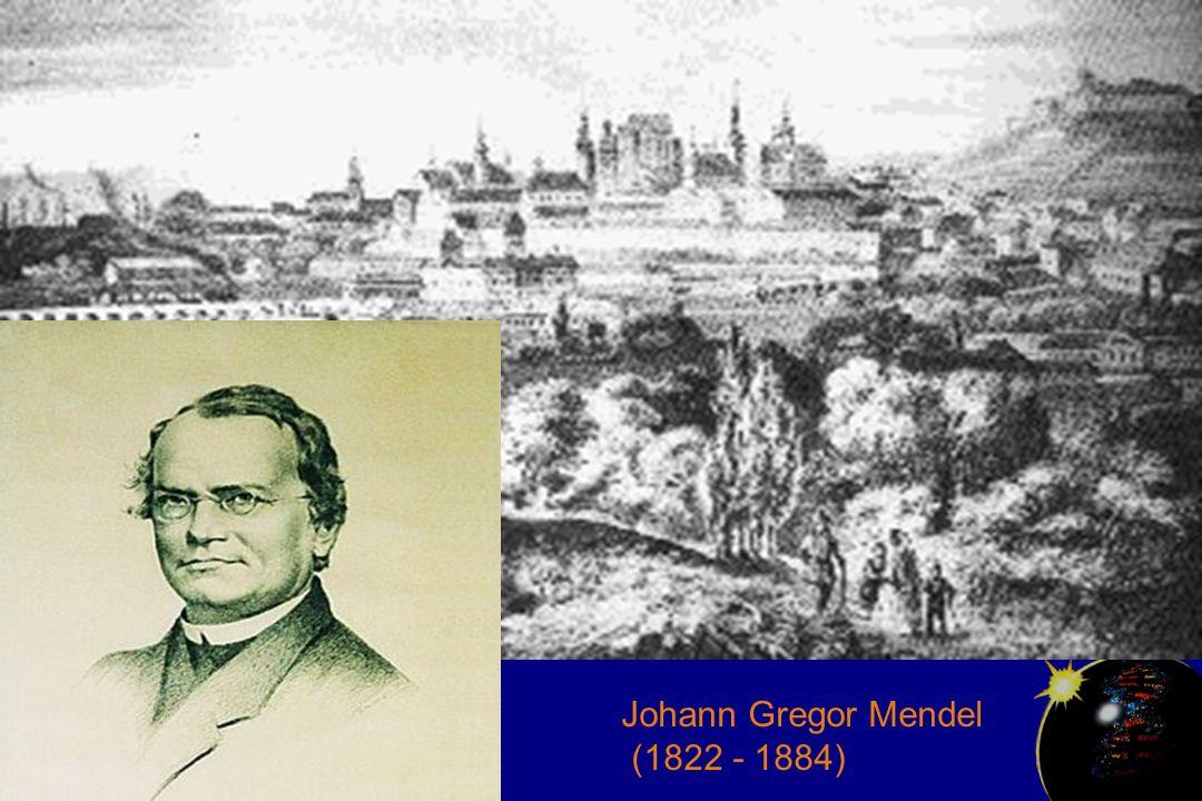 Johann Gregor Mendel (1822 - 1884)