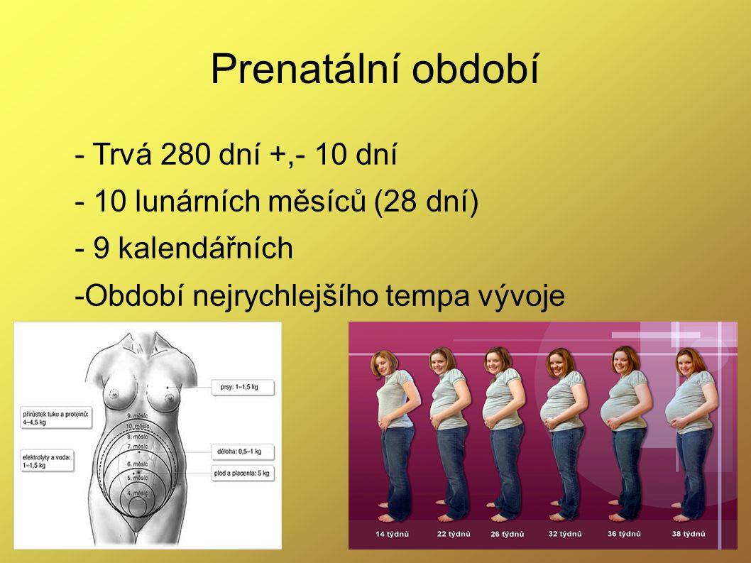 - Trvá 280 dní +,- 10 dní - 10 lunárních měsíců (28 dní) - 9 kalendářních -Období nejrychlejšího tempa vývoje Prenatální období