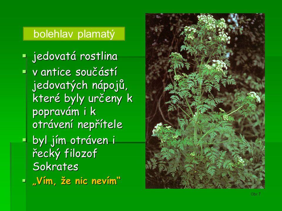 bolehlav plamatý  jedovatá rostlina  v antice součástí jedovatých nápojů, které byly určeny k popravám i k otrávení nepřítele  byl jím otráven i ře