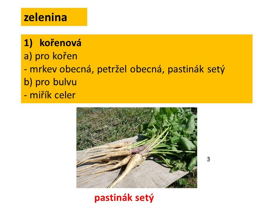 zelenina 1)kořenová a) pro kořen - mrkev obecná, petržel obecná, pastinák setý b) pro bulvu - miřík celer pastinák setý 3