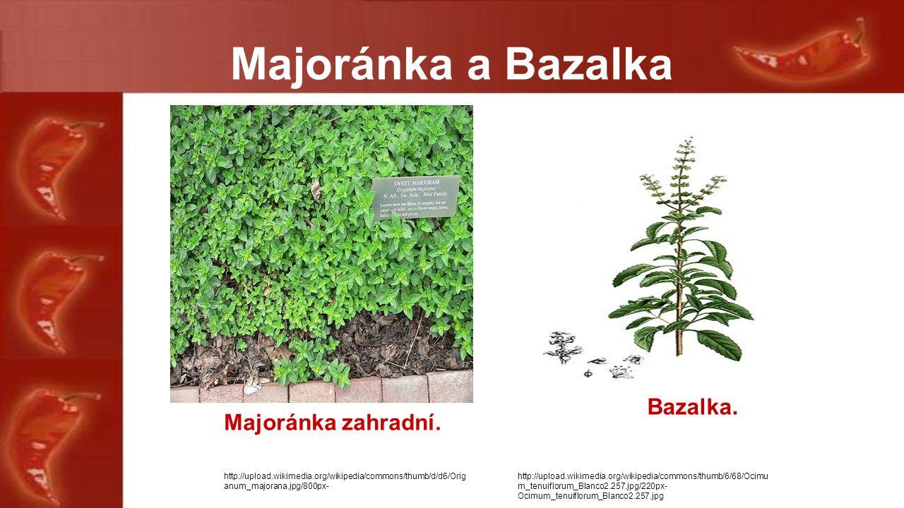 Majoránka a Bazalka Majoránka zahradní.Bazalka.