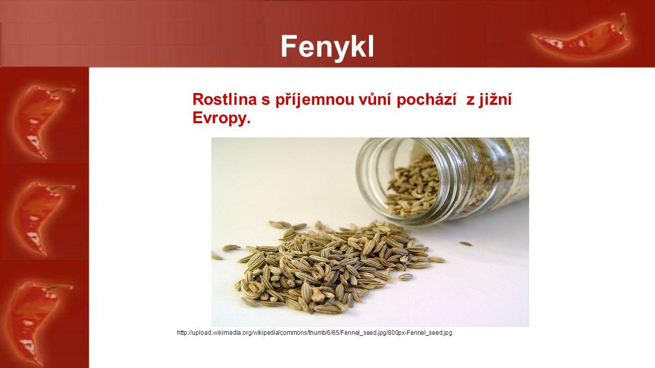 Fenykl Rostlina s příjemnou vůní pochází z jižní Evropy.