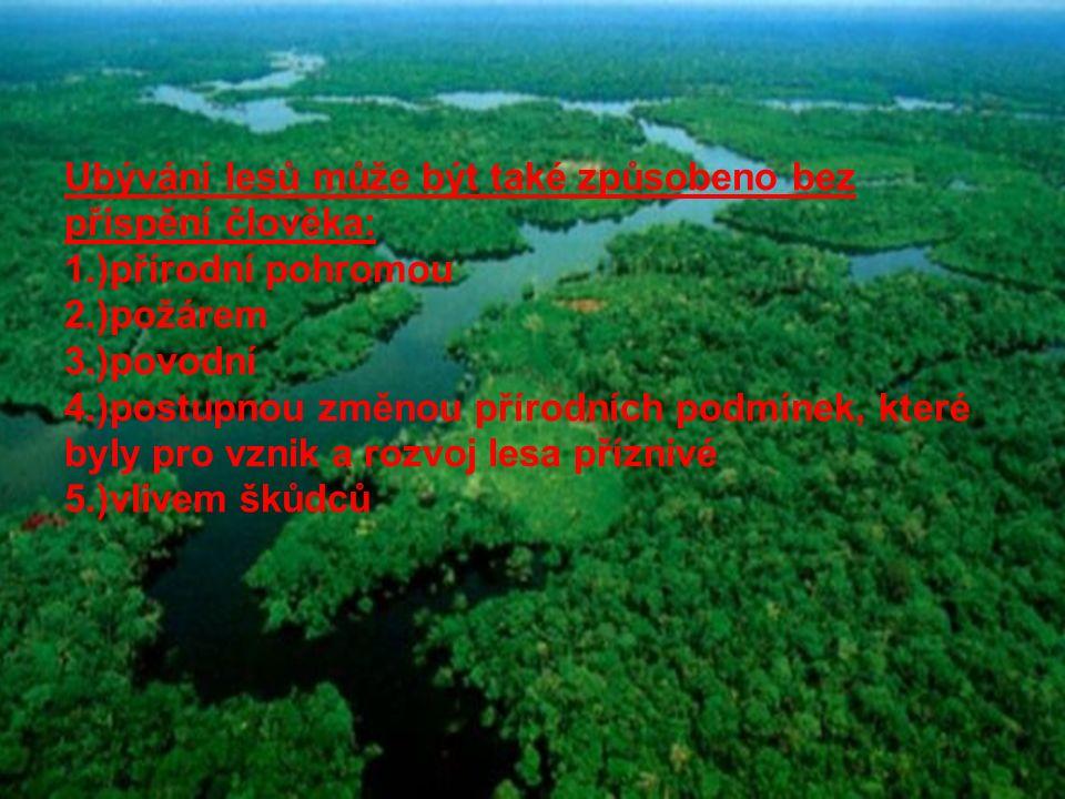 Ubývání lesů může být také způsobeno bez přispění člověka: 1.)přírodní pohromou 2.)požárem 3.)povodní 4.)postupnou změnou přírodních podmínek, které b