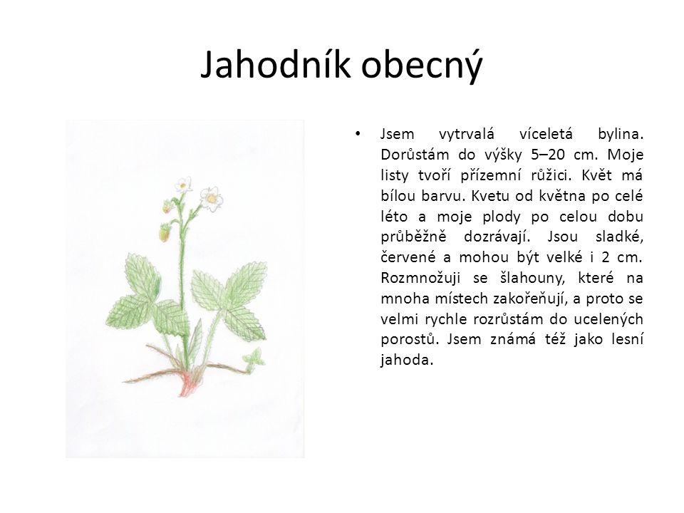 Jahodník obecný Jsem vytrvalá víceletá bylina. Dorůstám do výšky 5–20 cm.