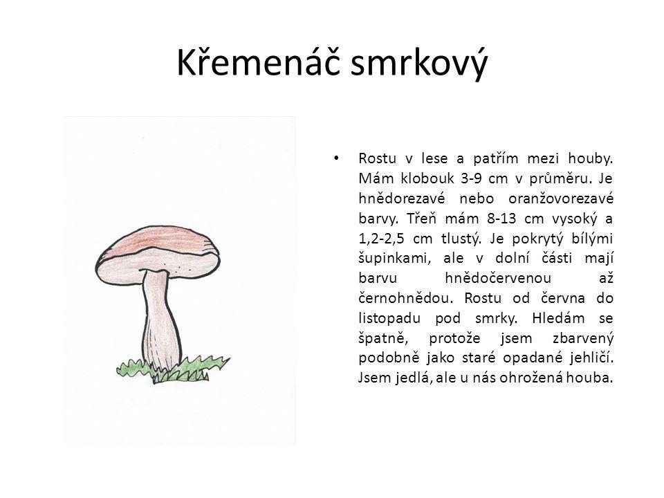 Křemenáč smrkový Rostu v lese a patřím mezi houby.