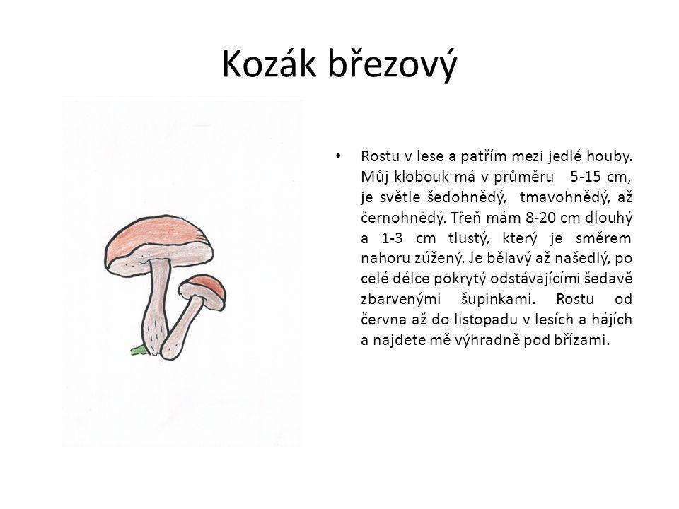 Kozák březový Rostu v lese a patřím mezi jedlé houby.