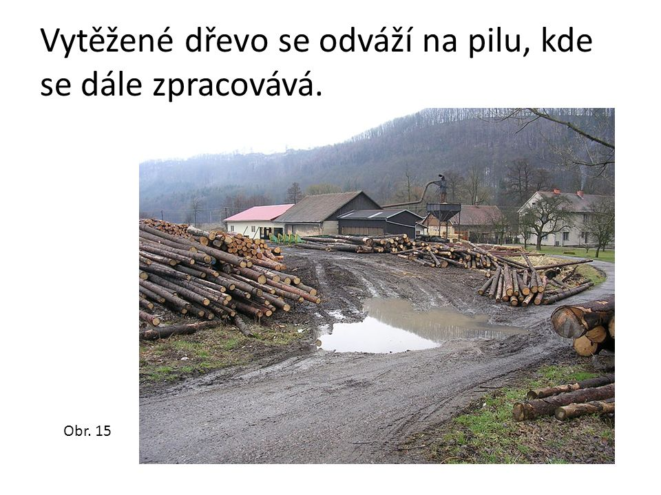Vytěžené dřevo se odváží na pilu, kde se dále zpracovává. Obr. 15