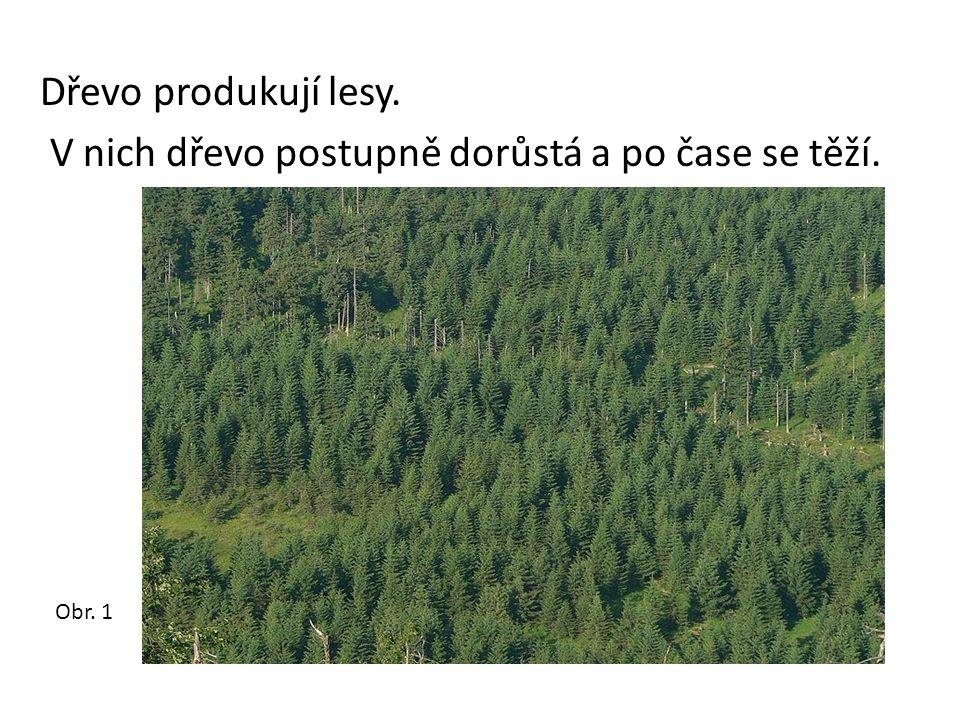 Dřevo produkují lesy. V nich dřevo postupně dorůstá a po čase se těží. Obr. 1