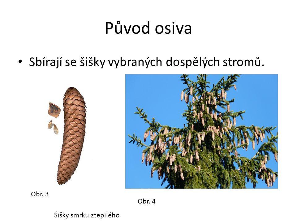 Původ osiva Sbírají se šišky vybraných dospělých stromů. Obr. 3 Obr. 4 Šišky smrku ztepilého