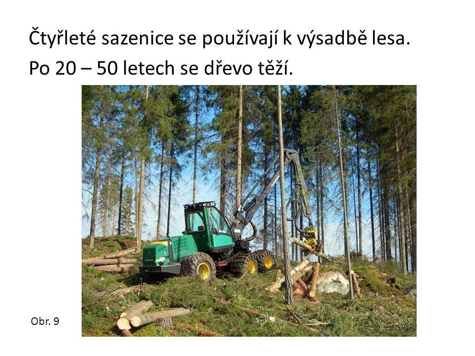 Čtyřleté sazenice se používají k výsadbě lesa. Po 20 – 50 letech se dřevo těží. Obr. 9