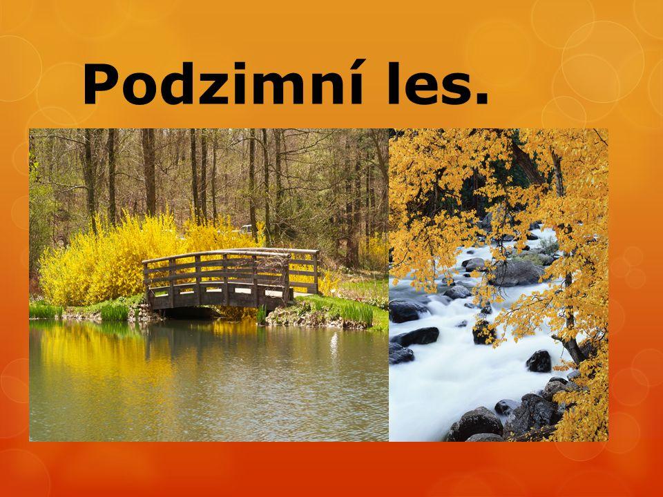 Podzimní les.