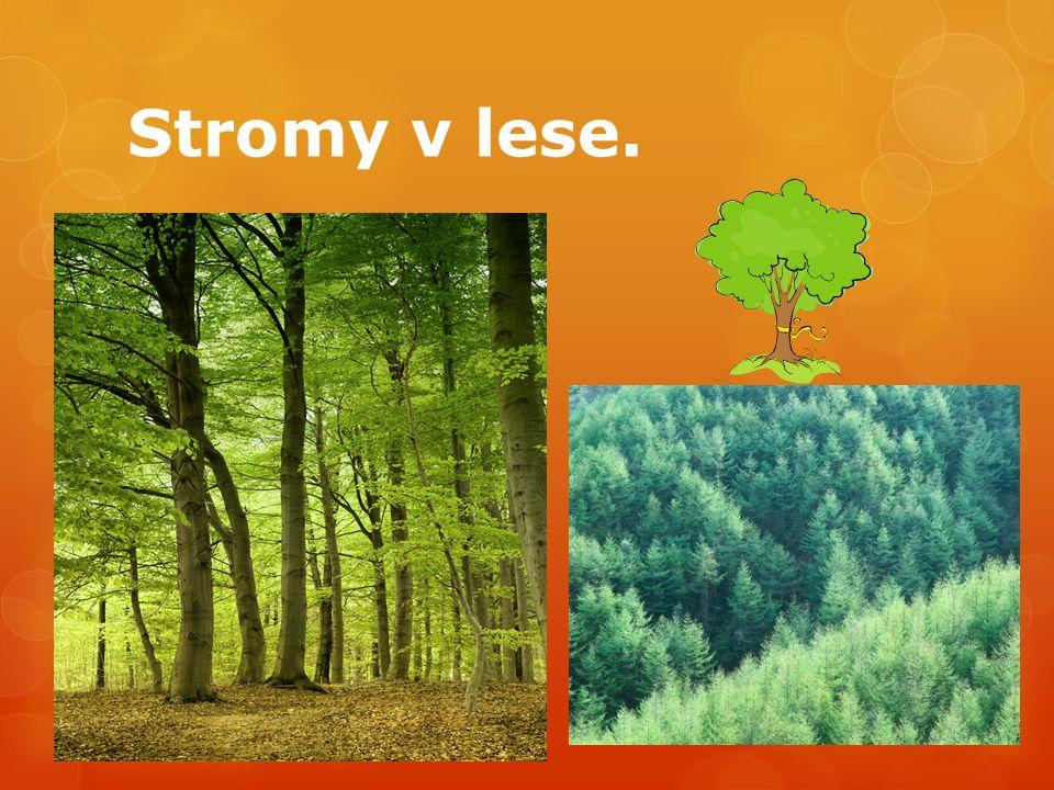 Stromy v lese.