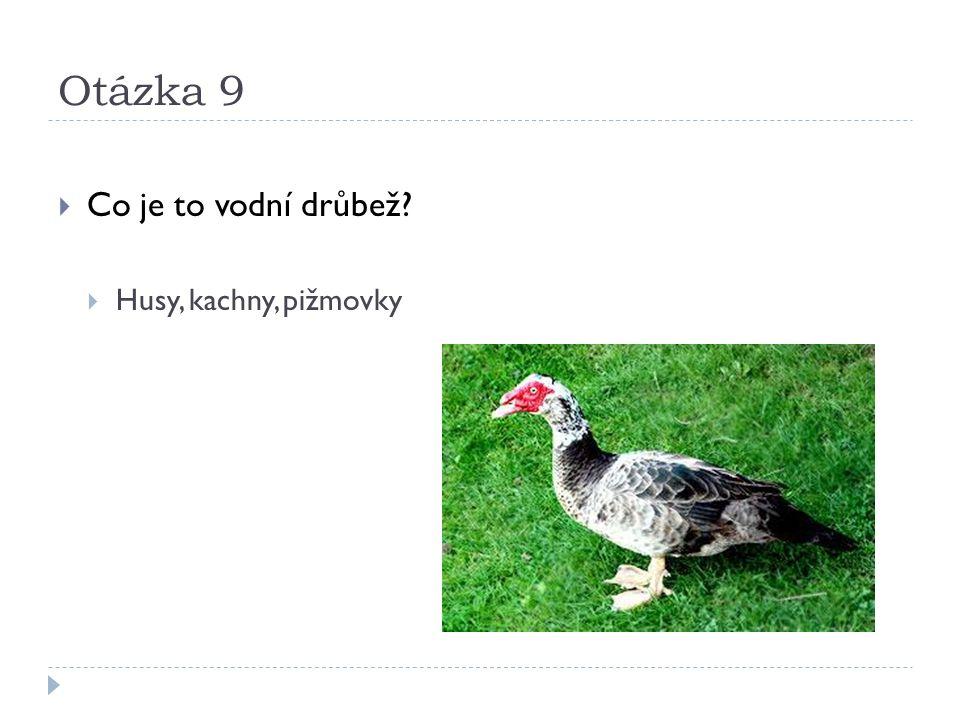 Otázka 9  Co je to vodní drůbež  Husy, kachny, pižmovky