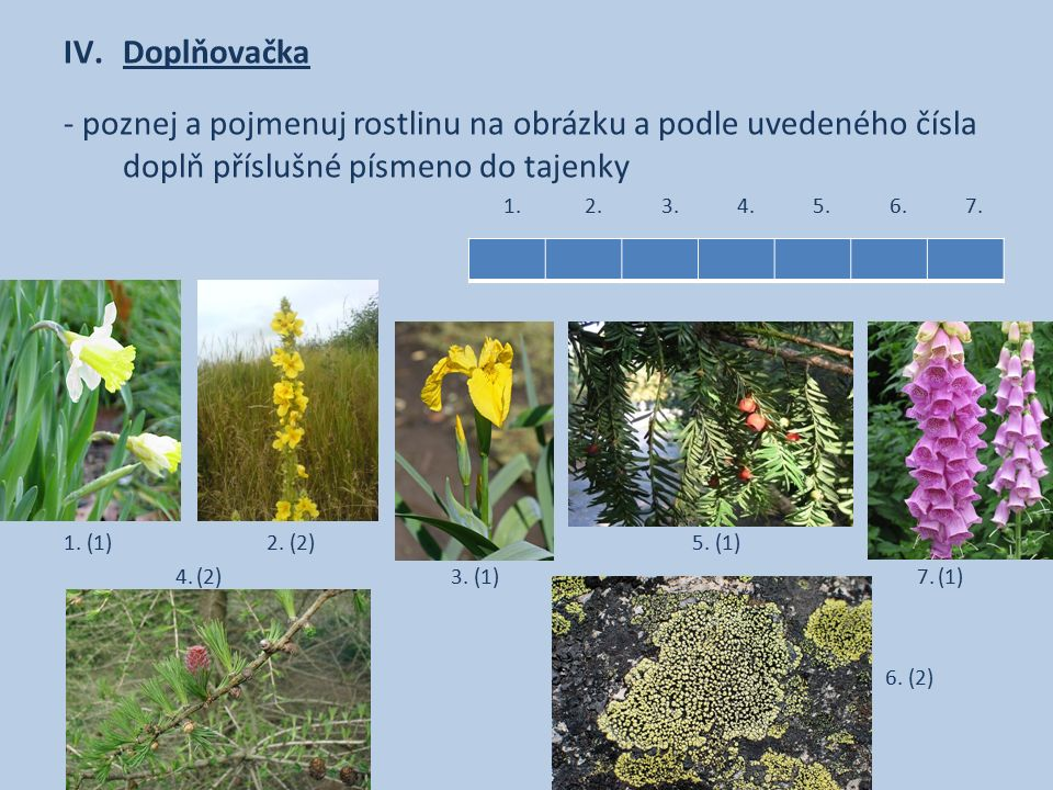 IV.Doplňovačka - poznej a pojmenuj rostlinu na obrázku a podle uvedeného čísla doplň příslušné písmeno do tajenky 1. 2. 3. 4. 5. 6. 7. 1. (1) 2. (2) 5
