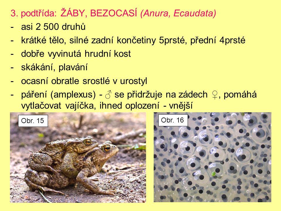 3. podtřída: ŽÁBY, BEZOCASÍ (Anura, Ecaudata) -asi 2 500 druhů -krátké tělo, silné zadní končetiny 5prsté, přední 4prsté -dobře vyvinutá hrudní kost -