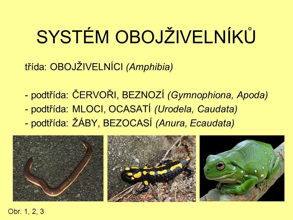 SYSTÉM OBOJŽIVELNÍKŮ třída: OBOJŽIVELNÍCI (Amphibia) - podtřída: ČERVOŘI, BEZNOZÍ (Gymnophiona, Apoda) - podtřída: MLOCI, OCASATÍ (Urodela, Caudata) -