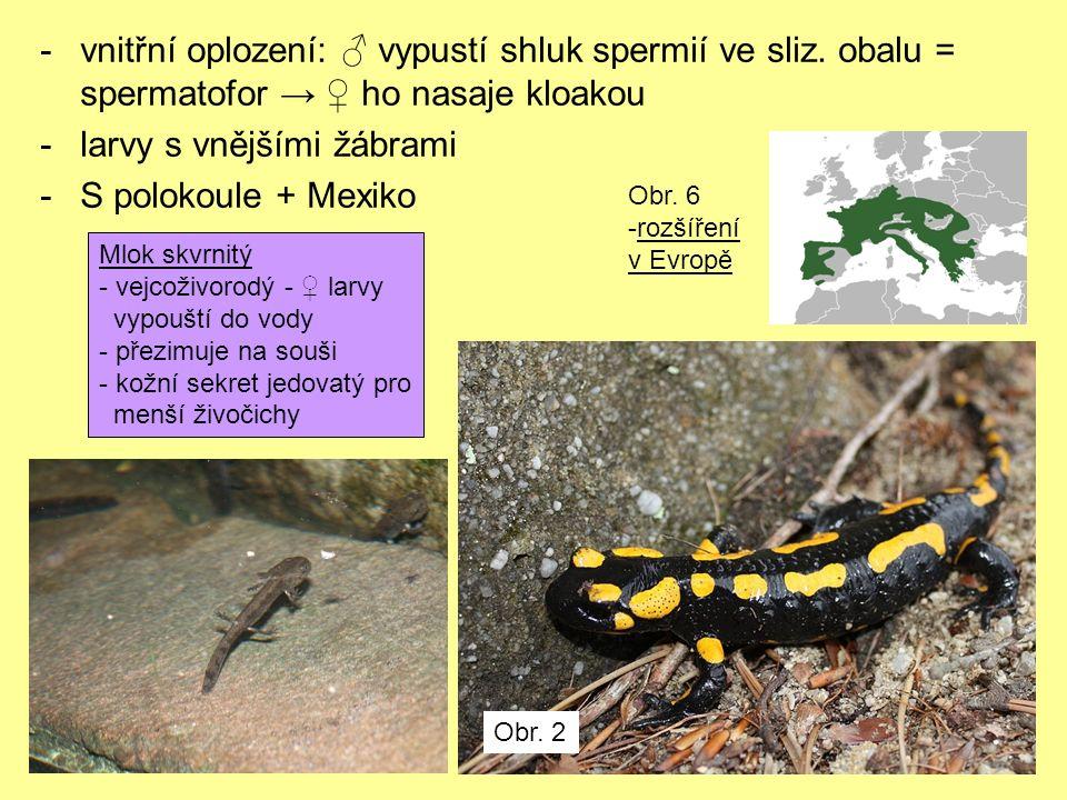 Zástupci dalších čeledí: -drápatka vodní (Xenopus laevis; pipovití) – laboratorní -v přírodě letní spánek (zahrabané v bahně) -Africké tropy Obr.