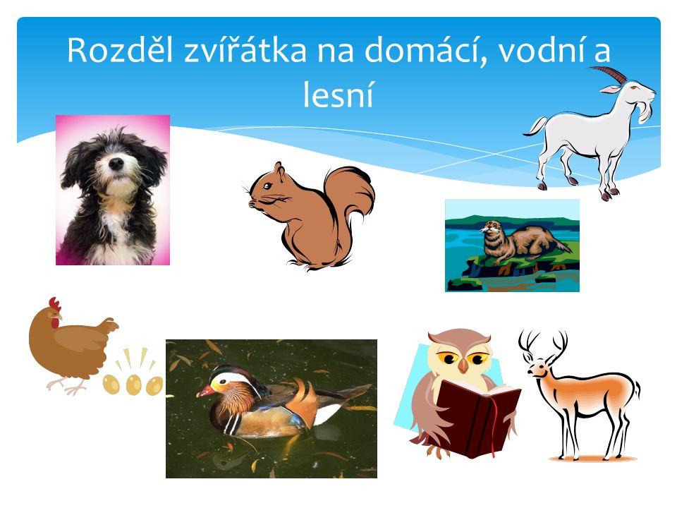 Rozděl zvířátka na domácí, vodní a lesní