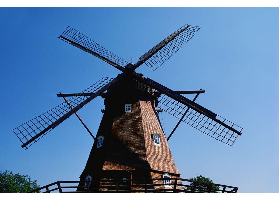 Tulipánové pole a větrný mlýn, ve kterém se vyrábí sýry