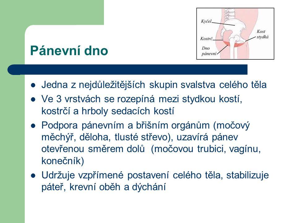 Pánevní dno Jedna z nejdůležitějších skupin svalstva celého těla Ve 3 vrstvách se rozepíná mezi stydkou kostí, kostrčí a hrboly sedacích kostí Podpora pánevním a břišním orgánům (močový měchýř, děloha, tlusté střevo), uzavírá pánev otevřenou směrem dolů (močovou trubici, vagínu, konečník) Udržuje vzpřímené postavení celého těla, stabilizuje páteř, krevní oběh a dýchání