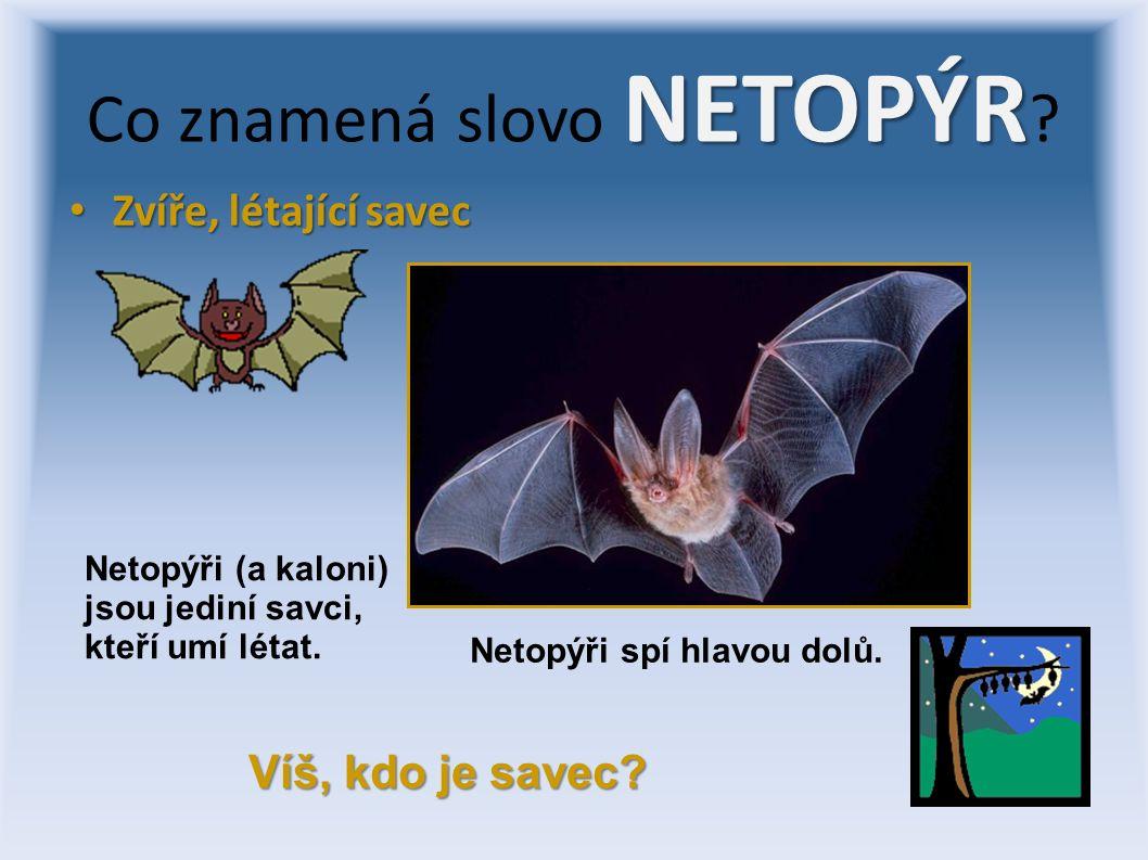 Zvíře, létající savec Zvíře, létající savec NETOPÝR Co znamená slovo NETOPÝR .