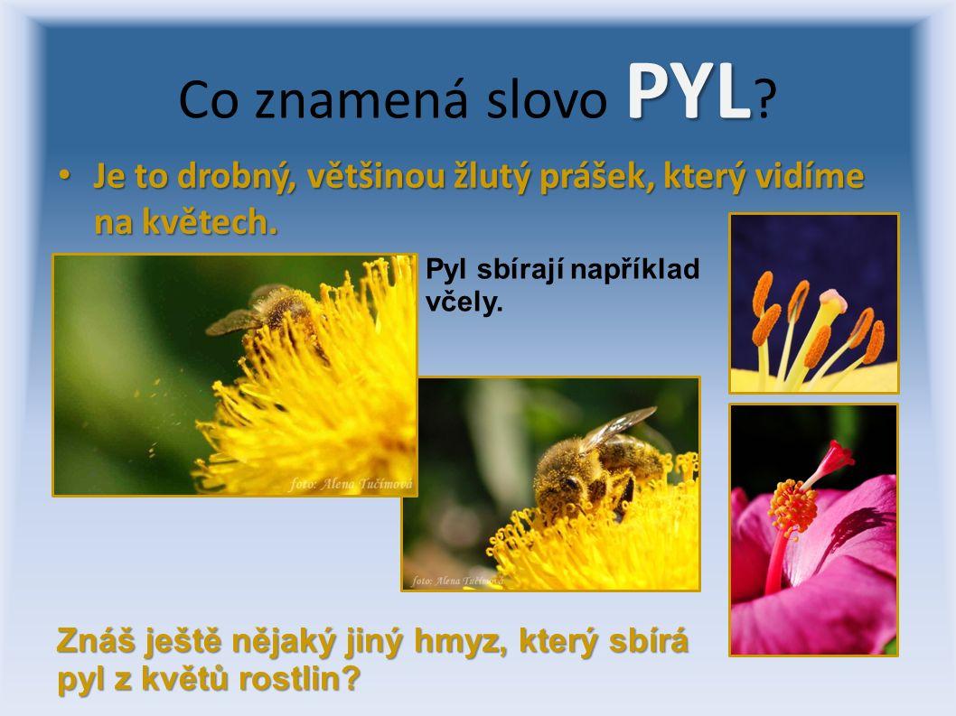Je to drobný, většinou žlutý prášek, který vidíme na květech. Je to drobný, většinou žlutý prášek, který vidíme na květech. PYL Co znamená slovo PYL ?