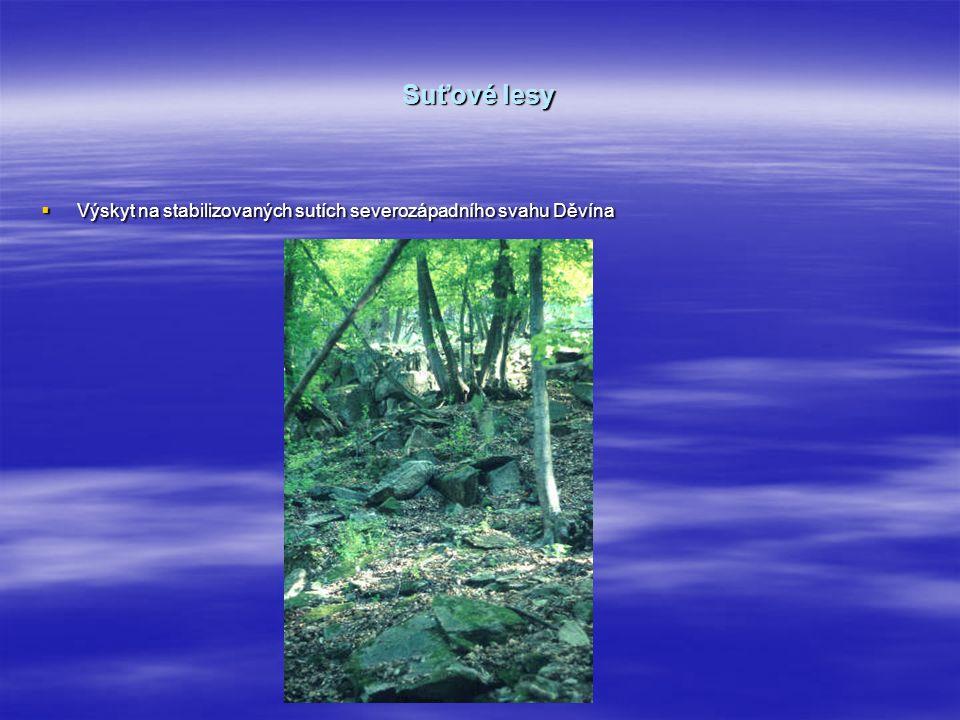 Suťové lesy  Výskyt na stabilizovaných sutích severozápadního svahu Děvína