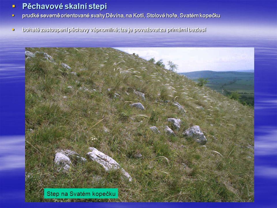  Pěchavové skalní stepi  prudké severně orientované svahy Děvína, na Kotli, Stolové hoře, Svatém kopečku  bohaté zastoupení pěchavy vápnomilné; lze je považovat za primární bezlesí Step na Svatém kopečku