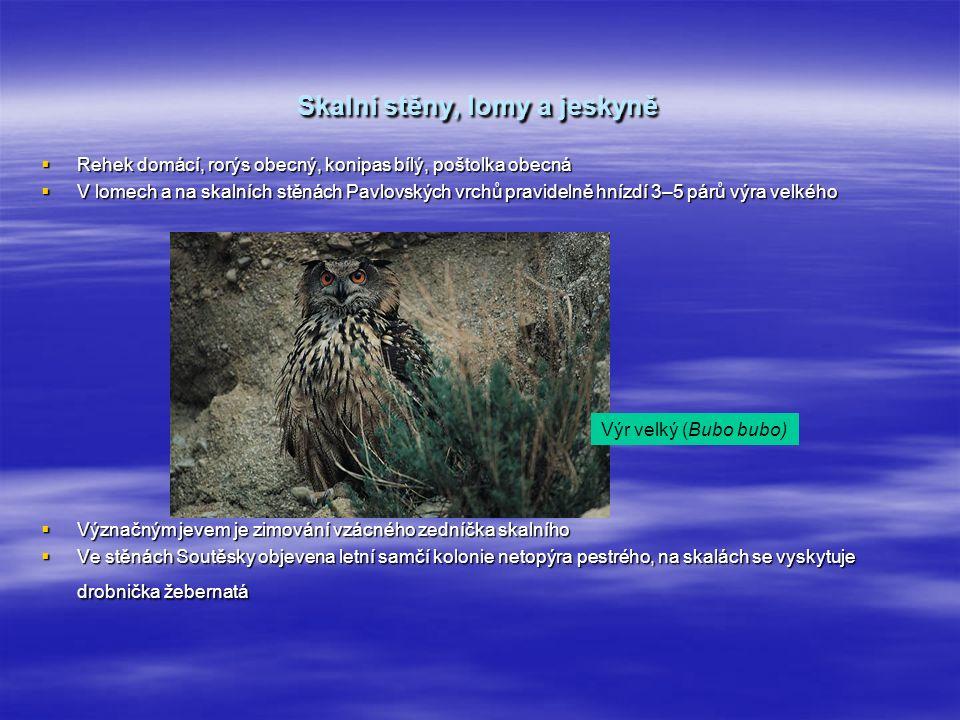 Skalní stěny, lomy a jeskyně  Rehek domácí, rorýs obecný, konipas bílý, poštolka obecná  V lomech a na skalních stěnách Pavlovských vrchů pravidelně hnízdí 3–5 párů výra velkého  Význačným jevem je zimování vzácného zedníčka skalního  Ve stěnách Soutěsky objevena letní samčí kolonie netopýra pestrého, na skalách se vyskytuje drobnička žebernatá Výr velký (Bubo bubo)