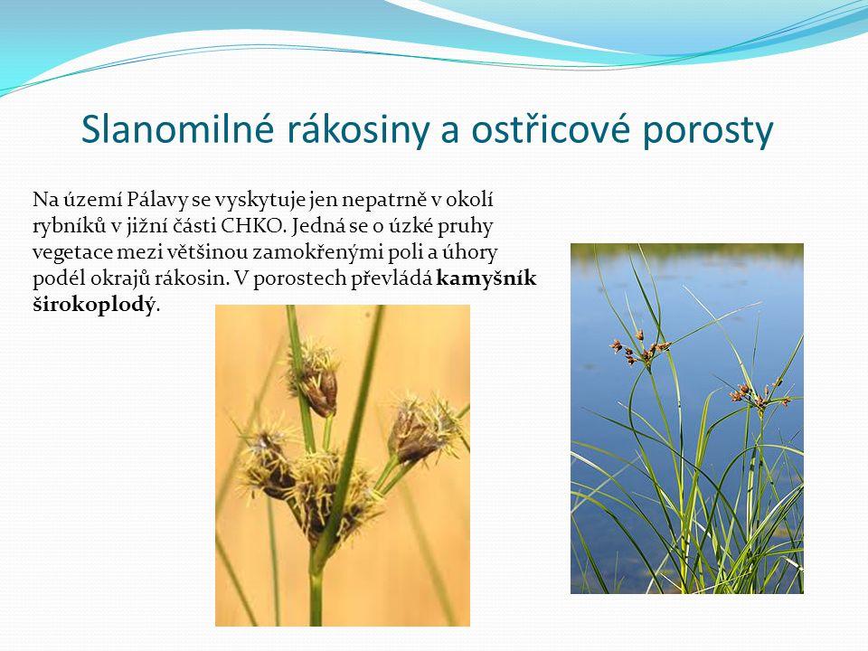 Slanomilné rákosiny a ostřicové porosty Na území Pálavy se vyskytuje jen nepatrně v okolí rybníků v jižní části CHKO. Jedná se o úzké pruhy vegetace m