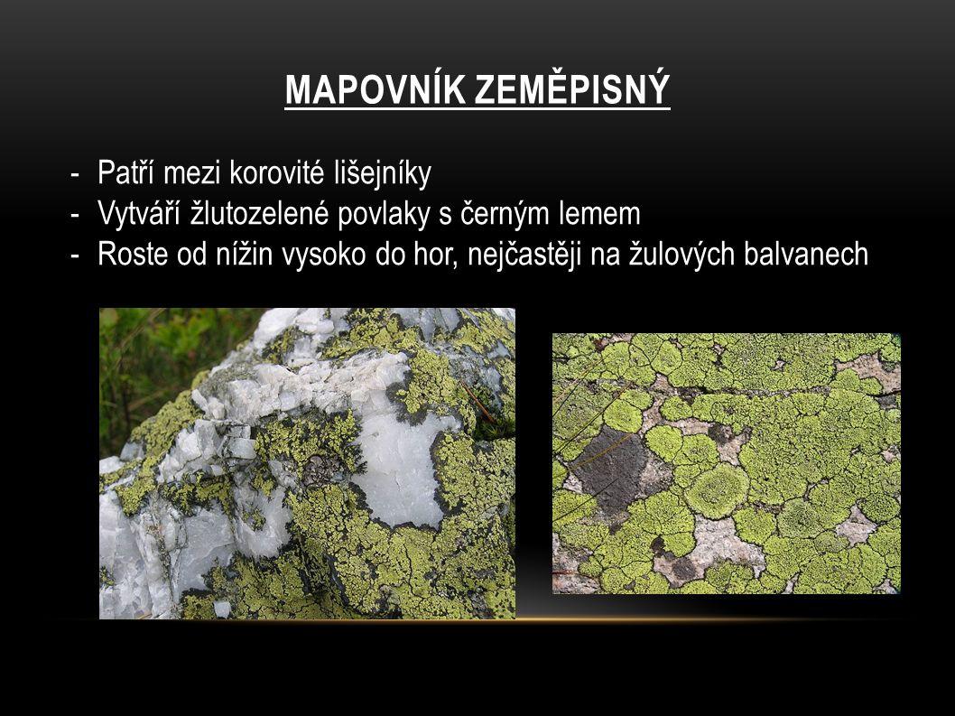 MAPOVNÍK ZEMĚPISNÝ -Patří mezi korovité lišejníky -Vytváří žlutozelené povlaky s černým lemem -Roste od nížin vysoko do hor, nejčastěji na žulových ba