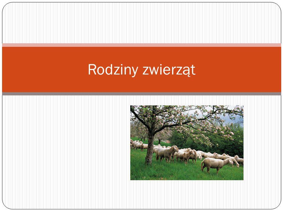 Číslo přílohy: VY_32_INOVACE_20_RODZINY ZWIERZAT Škola: Autor: Základní škola a mateřská škola s polským jazykem vyučovacím Bukovec Mgr.