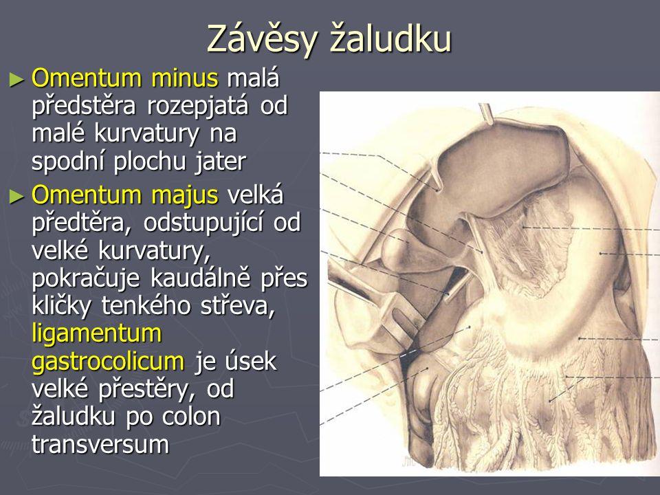 Závěsy žaludku ► Omentum minus malá předstěra rozepjatá od malé kurvatury na spodní plochu jater ► Omentum majus velká předtěra, odstupující od velké kurvatury, pokračuje kaudálně přes kličky tenkého střeva, ligamentum gastrocolicum je úsek velké přestěry, od žaludku po colon transversum
