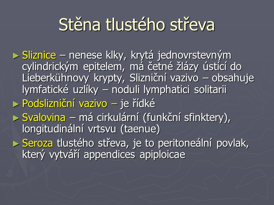 Stěna tlustého střeva ► Sliznice – nenese klky, krytá jednovrstevným cylindrickým epitelem, má četné žlázy ústící do Lieberkühnovy krypty, Slizniční vazivo – obsahuje lymfatické uzlíky – noduli lymphatici solitarii ► Podslizniční vazivo – je řídké ► Svalovina – má cirkulární (funkční sfinktery), longitudinální vrtsvu (taenue) ► Seroza tlustého střeva, je to peritoneální povlak, který vytváří appendices apiploicae