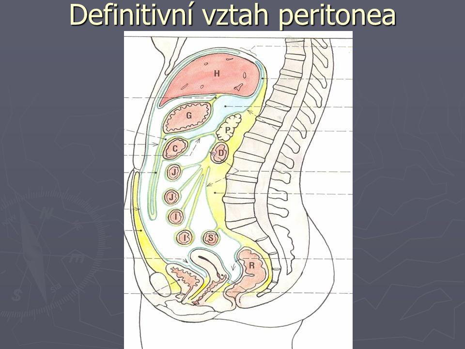 Definitivní vztah peritonea
