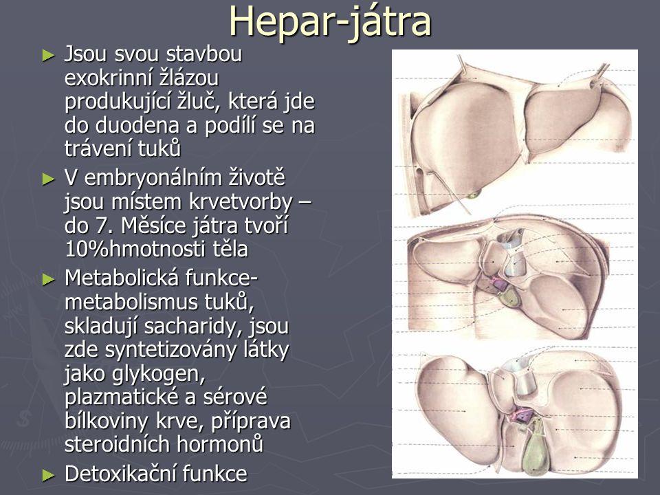 Hepar-játra ► Jsou svou stavbou exokrinní žlázou produkující žluč, která jde do duodena a podílí se na trávení tuků ► V embryonálním životě jsou místem krvetvorby – do 7.