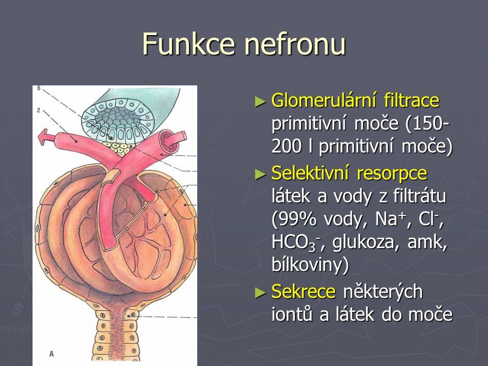 Funkce nefronu ► Glomerulární filtrace primitivní moče (150- 200 l primitivní moče) ► Selektivní resorpce látek a vody z filtrátu (99% vody, Na +, Cl -, HCO 3 -, glukoza, amk, bílkoviny) ► Sekrece některých iontů a látek do moče