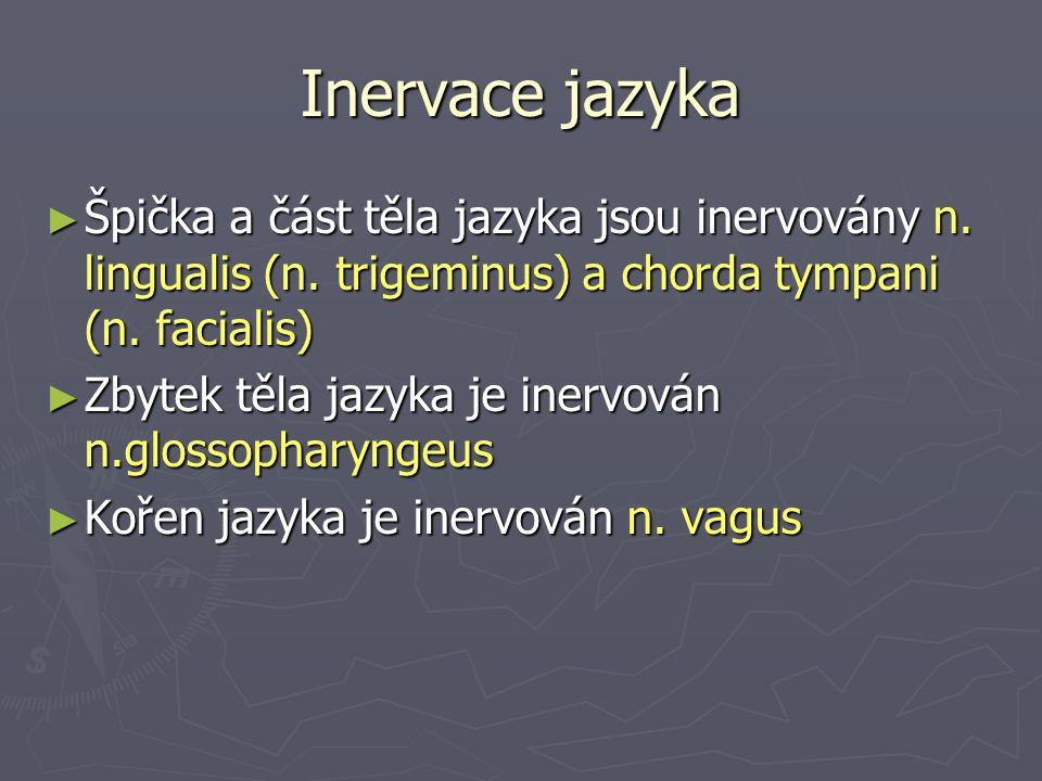 Inervace jazyka ► Špička a část těla jazyka jsou inervovány n.