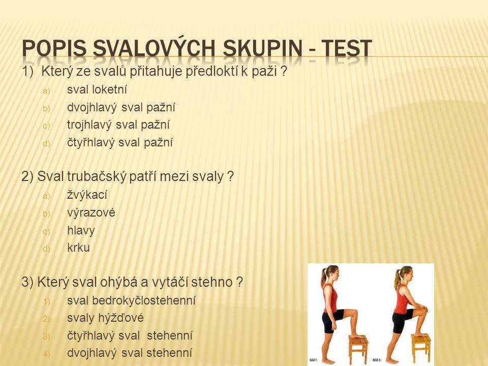 1) Který ze svalů přitahuje předloktí k paži ? a) sval loketní b) dvojhlavý sval pažní c) trojhlavý sval pažní d) čtyřhlavý sval pažní 2) Sval trubačs