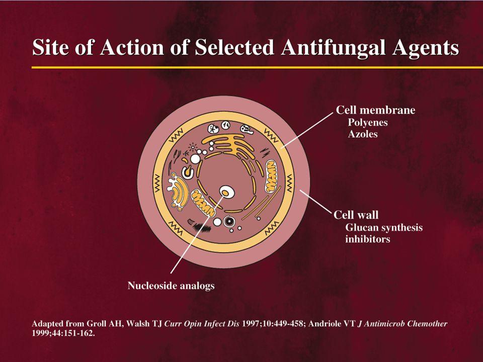Antimykotika AZOLY Inhibice biosyntézy ergosterolu v buněčné membráně plísně s následnou blokádou růstu Cidní – statický účinek Lokální : ekonazol, klotrimoxasol… Systémová aplikace : mikonazol, flukonazol, itrakonazol, vorikonazol….