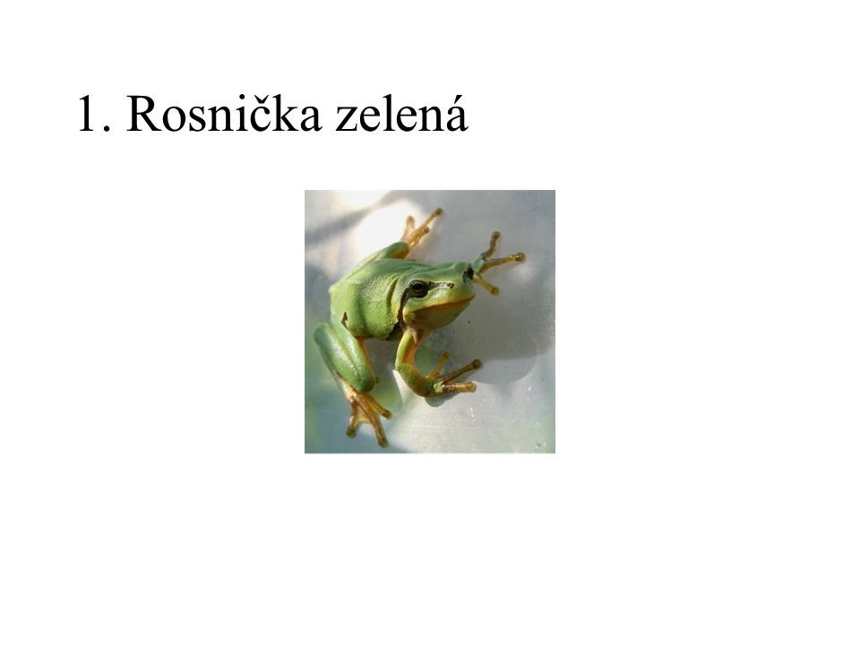 1. Rosnička zelená