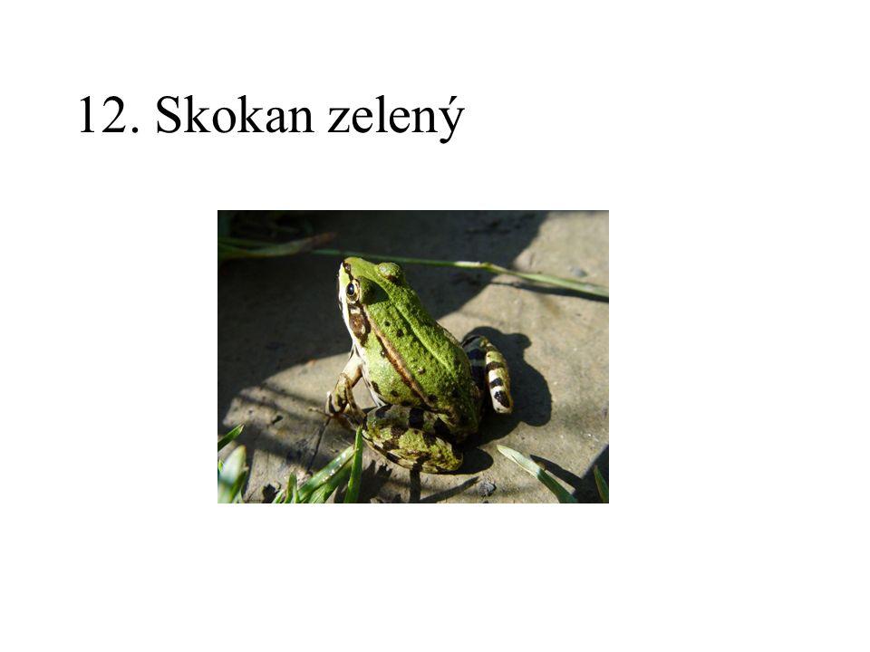 12. Skokan zelený
