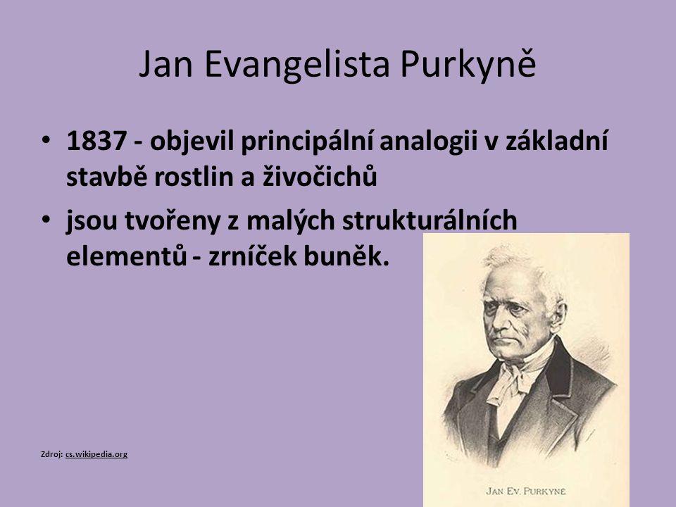 Jan Evangelista Purkyně 1837 - objevil principální analogii v základní stavbě rostlin a živočichů jsou tvořeny z malých strukturálních elementů - zrníček buněk.