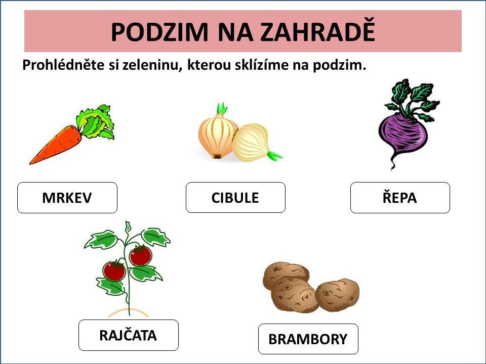 PODZIM NA ZAHRADĚ Prohlédněte si zeleninu, kterou sklízíme na podzim.