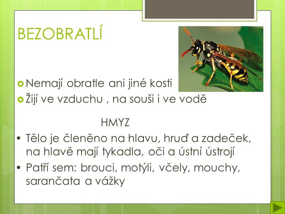 BEZOBRATLÍ  Nemají obratle ani jiné kosti  Žijí ve vzduchu, na souši i ve vodě HMYZ Tělo je členěno na hlavu, hruď a zadeček, na hlavě mají tykadla, oči a ústní ústrojí Patří sem: brouci, motýli, včely, mouchy, sarančata a vážky