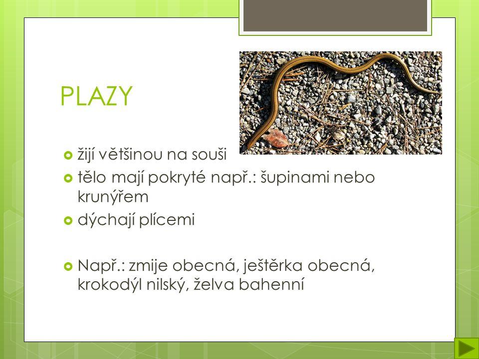 PLAZY  žijí většinou na souši  tělo mají pokryté např.: šupinami nebo krunýřem  dýchají plícemi  Např.: zmije obecná, ještěrka obecná, krokodýl nilský, želva bahenní